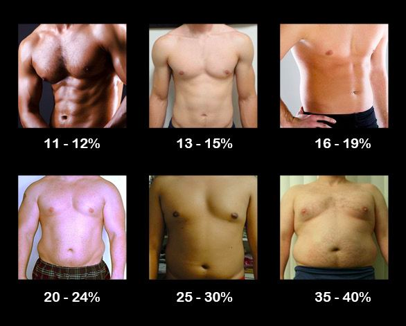 body fat picture estimation