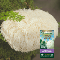 Best Lion's Mane Supplements: Benefits, Pros, and Cons